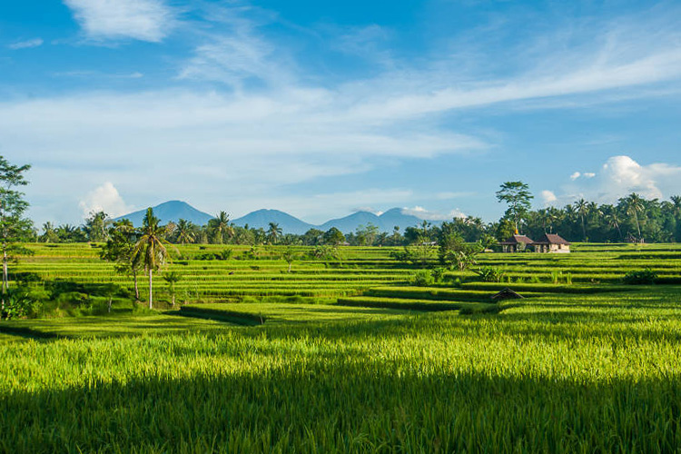 Bali scenery of mountains and rice fields during yoga teacher training