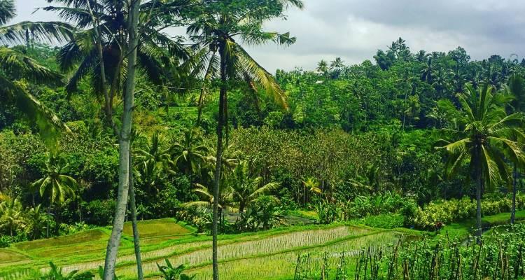 Beautiful scenery in Ubud Bali typical of a yoga teacher training program in Bali