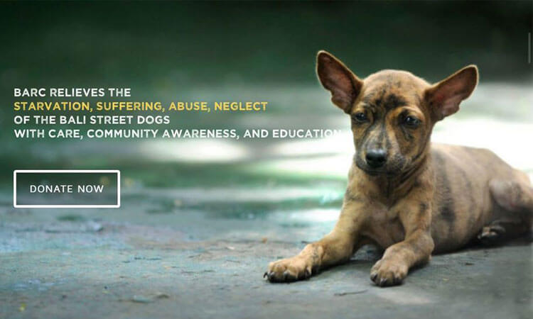 barc - bali adoption & rehabilitation center