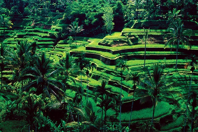 Best of Bali Highlishts Ubud