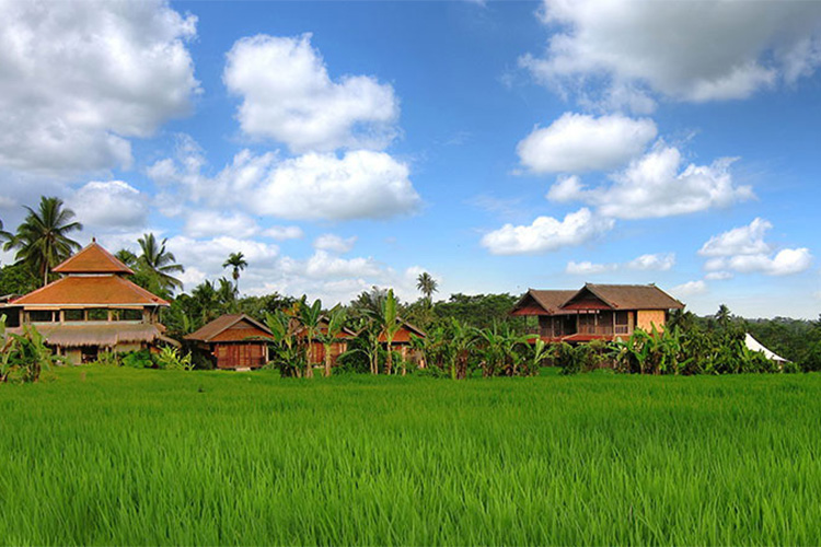 Best Ecolodges in Bali Bali Silent Retreat
