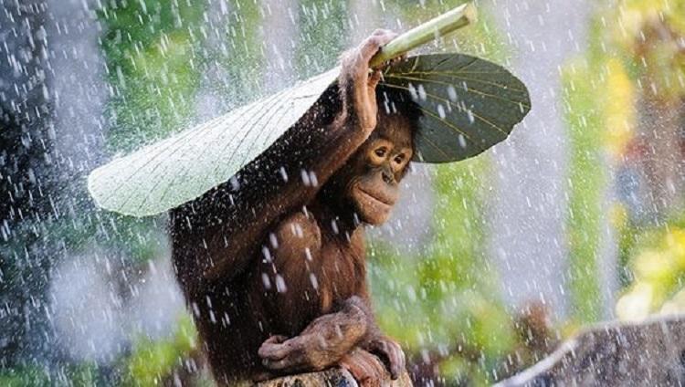 Weather in Bali - always take your umbrella during wet season