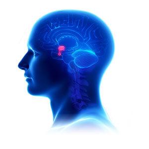 biodynamic craniosacral therapy training