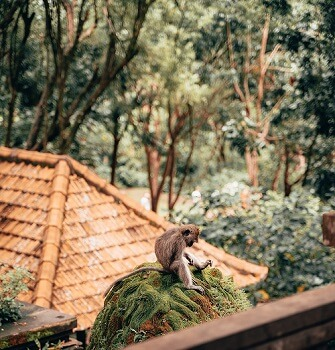 things to do around ubud monkey forest